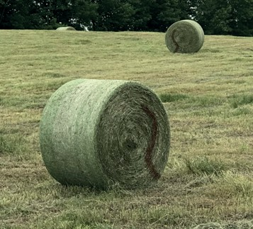 Wet round bale marked
